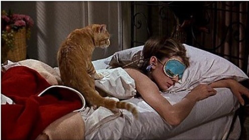 Holly Golightly sleeping with Cat